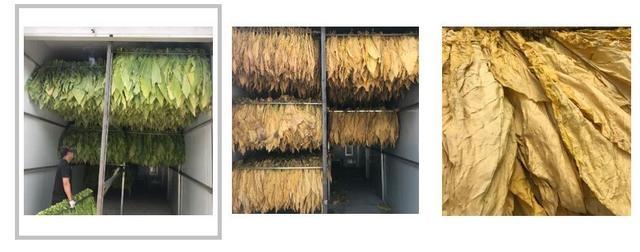 空气能热泵助力烟叶烘干,高效节能,品相好!