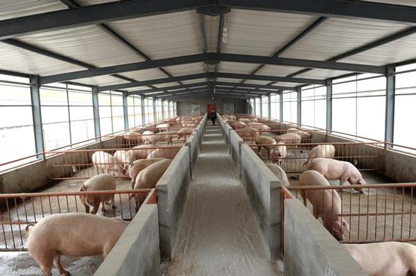 冬暖夏凉好舒适,同益空气能热泵让猪过上幸福生活