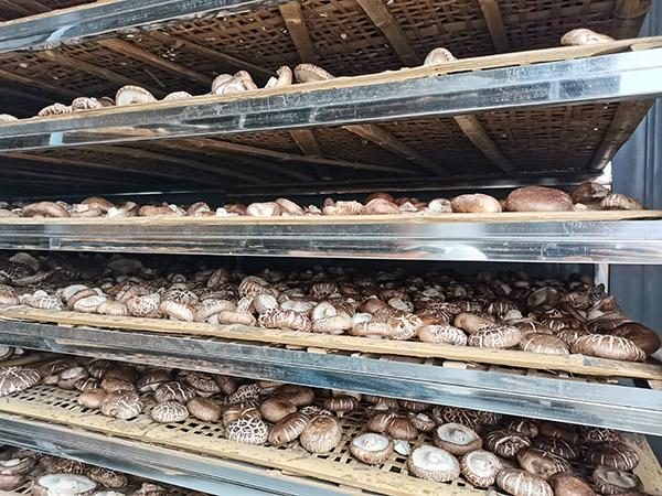 香菇烘干,就用同益空气能