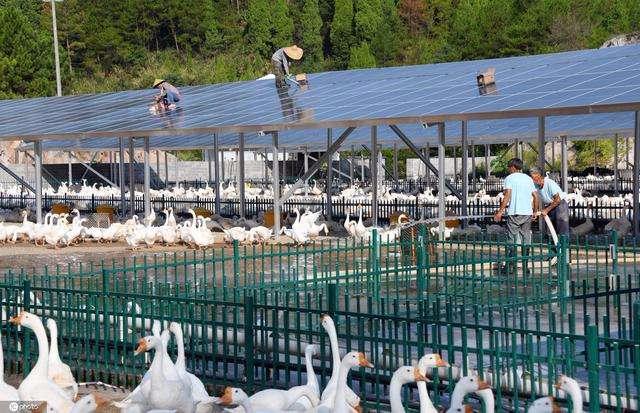 浙江仙居:废弃矿山变身光伏发电与养鹅场 助力农民增收